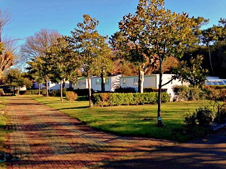 Emplacements nu camping Vendee