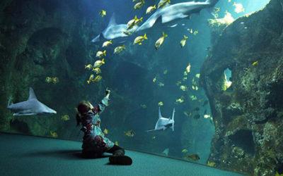 Aquarium Talmont Saint Hilaire